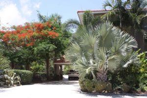 Maria's Beach landscaping foliage